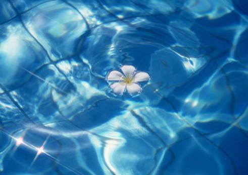 Kihei「Surface of the Water」:スマホ壁紙(10)