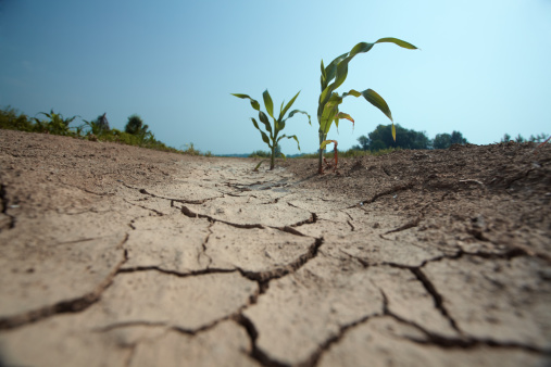 Drought「drought」:スマホ壁紙(14)