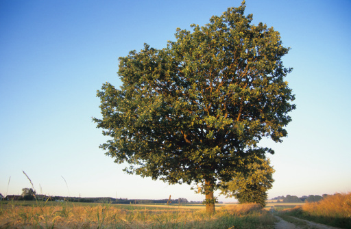 寂しさ「'Red beech in a field, Bavaria, Germany'」:スマホ壁紙(16)