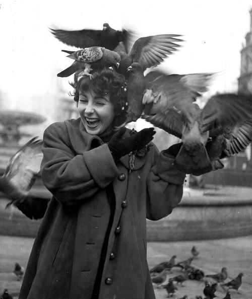 Trafalgar Square「Taylor Feeds Pigeons」:写真・画像(14)[壁紙.com]