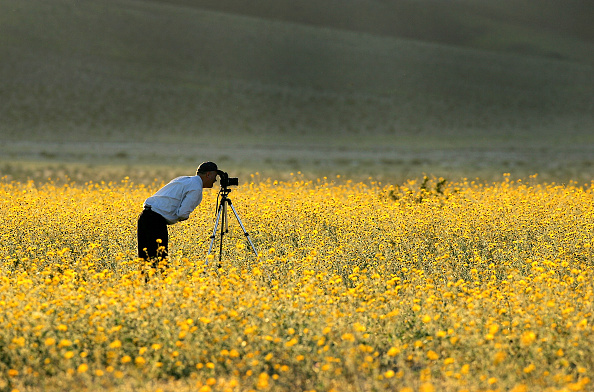 flower「Record Rains Bring Rare Wildflowers To Death Valley」:写真・画像(1)[壁紙.com]