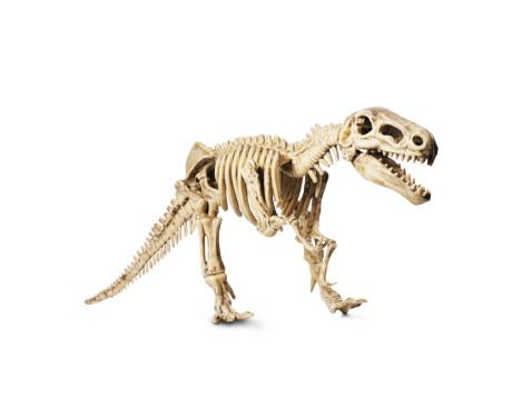 恐竜「恐竜の骨モデル白で分離」:スマホ壁紙(8)