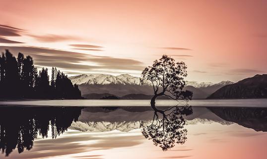 Mirror Lake「Beautiful tree of lake Wanaka」:スマホ壁紙(10)