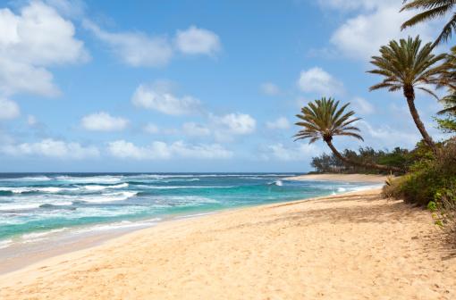オアフ島「美しい熱帯のビーチでヤシの木」:スマホ壁紙(5)