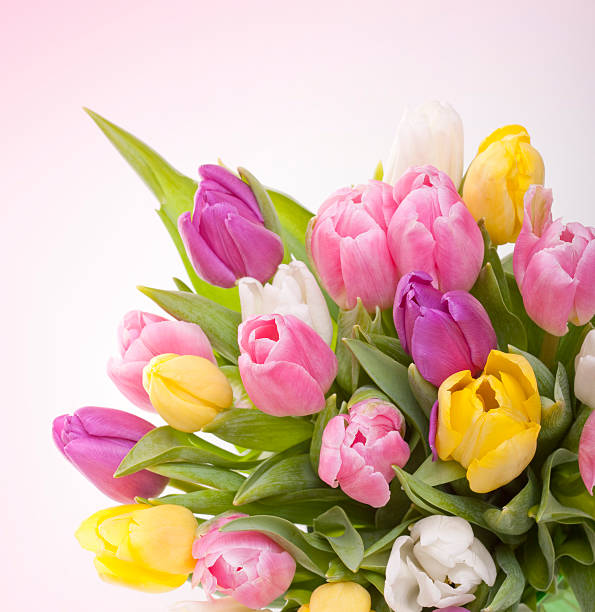 Beautiful tulips bouquet:スマホ壁紙(壁紙.com)