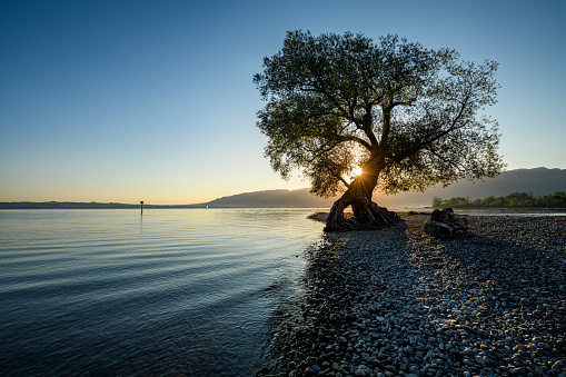 Beauty In Nature「Beautiful tree at the beach at sunrise」:スマホ壁紙(10)