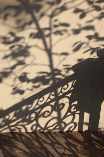 19th Century「Beautiful Tree Shadows on Wall」:スマホ壁紙(9)