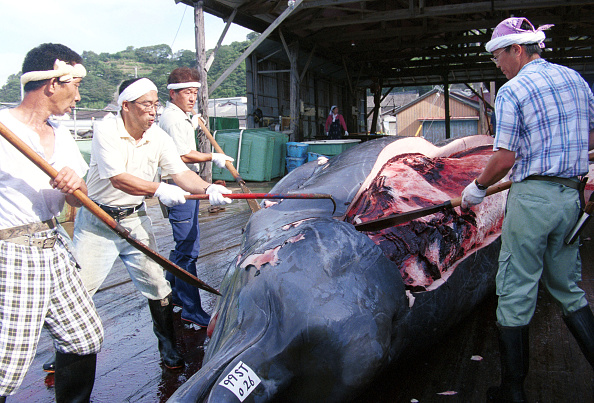 Japan「A Whale is Harvested in Japan」:写真・画像(8)[壁紙.com]