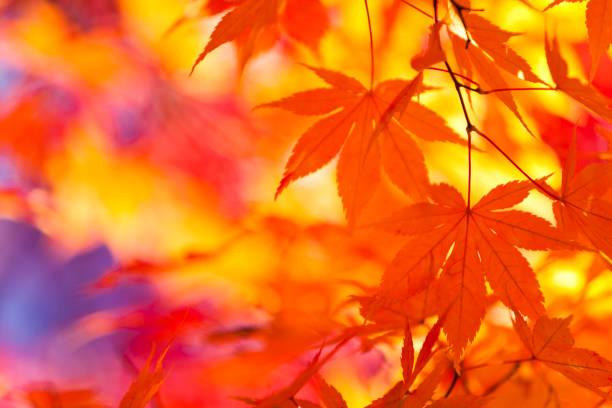 Vibrant Colors of Autumn Leaves:スマホ壁紙(壁紙.com)