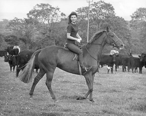 Horse「Jackie's Horse」:写真・画像(8)[壁紙.com]