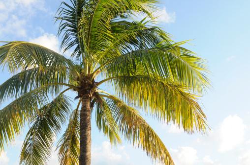 Miami Beach「パームツリートップ」:スマホ壁紙(1)
