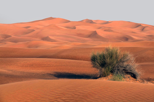 Arid Climate「Bush growing in Desert landscape, Dubai, United Arab Emirates」:スマホ壁紙(5)