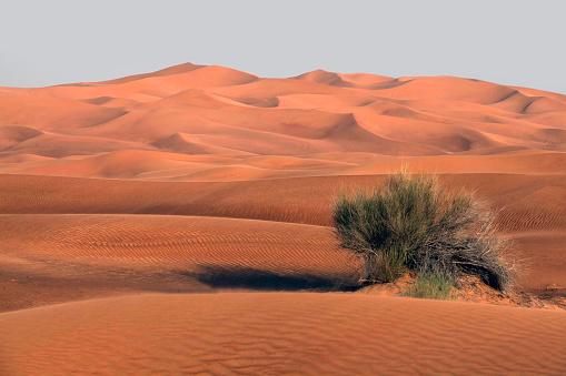 Desert「Bush growing in Desert landscape, Dubai, United Arab Emirates」:スマホ壁紙(3)