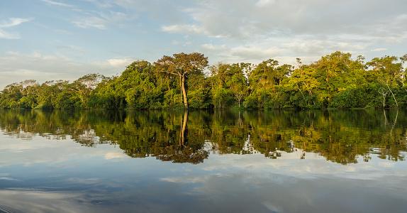 Amazon Rainforest「Beautiful amazon river and rainforest」:スマホ壁紙(15)