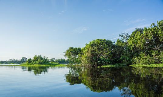 Amazon Rainforest「Beautiful amazon river and rainforest」:スマホ壁紙(6)