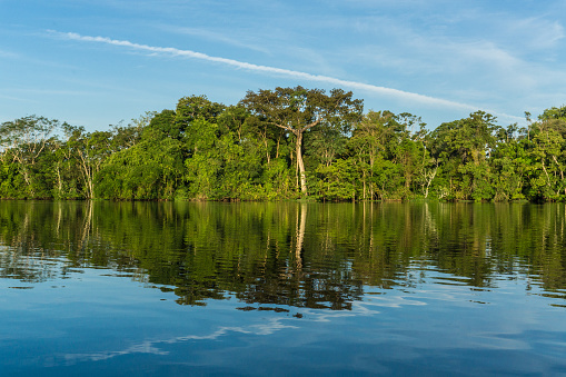 Amazon Rainforest「Beautiful amazon river and rainforest」:スマホ壁紙(14)