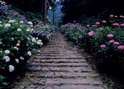 あじさい「Hydrangea Hill, Tochigi, Tochigi, Japan」:スマホ壁紙(19)