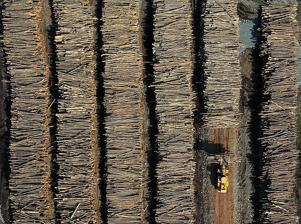 Log「Montana Forests Struggle With Climate Change」:写真・画像(8)[壁紙.com]