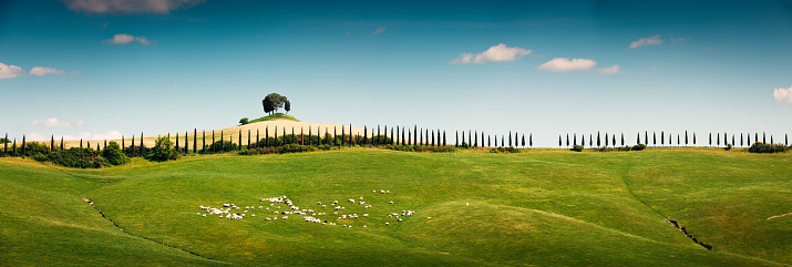 Flock Of Sheep「Panoramic Tuscany Landscape」:スマホ壁紙(13)