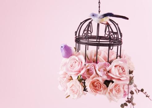 カップル「Birdcage and Rose」:スマホ壁紙(7)