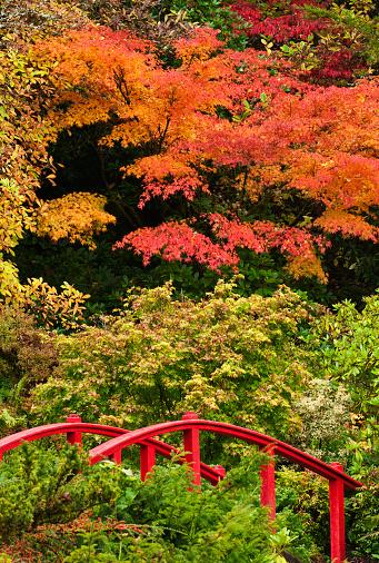 Japanese Maple「the red bridge」:スマホ壁紙(19)