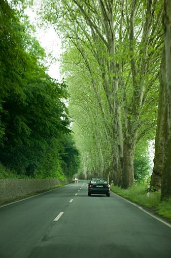 Avenue「Car travelling along leafy avenue」:スマホ壁紙(9)