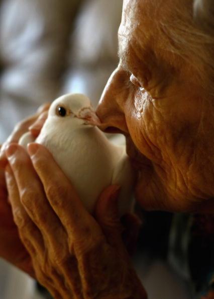 鳥「Hospice Cares For Terminally Ill During Final Days」:写真・画像(18)[壁紙.com]