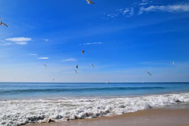 Sri Lanka, birds flying on pristine beach in hungama, gurupokuna in southern Sri Lanka:スマホ壁紙(壁紙.com)