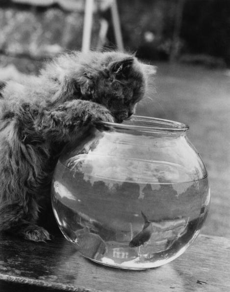 William Vanderson「Feline Fishing」:写真・画像(5)[壁紙.com]