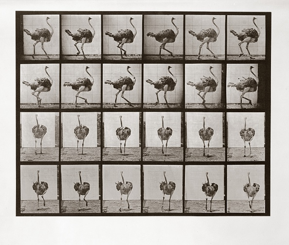 野生動物「Ostrich Running」:写真・画像(4)[壁紙.com]