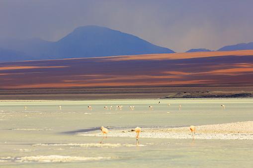 Bolivian Andes「Impressive Laguna verde - green lake reflection, Andean Flamingos birds and Idyllic Altiplano Atacama Desert, Volcanic landscape panorama – Potosi region, Bolivian Andes, Bolívia」:スマホ壁紙(11)
