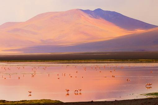 Bolivian Andes「Impressive Laguna colorada at sunset - Red lake reflection, Andean Flamingos birds and Idyllic Altiplano Atacama Desert, Volcanic landscape panorama – Potosi region, Bolivian Andes, Bolívia」:スマホ壁紙(7)