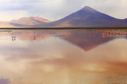 Bolivian Andes「Impressive Laguna colorada - Red lake reflection, Andean Flamingos birds and Idyllic Altiplano Atacama Desert, Volcanic landscape panorama – Potosi region, Bolivian Andes, Bolívia」:スマホ壁紙(17)