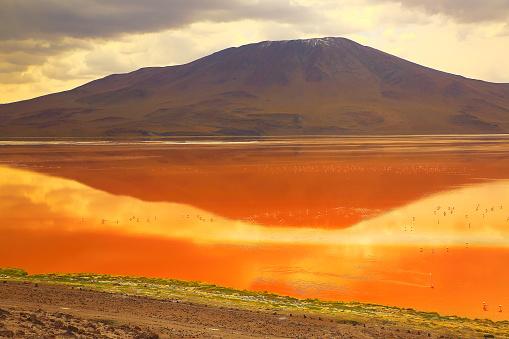 Bolivian Andes「Impressive Laguna colorada - Red lake reflection, Andean Flamingos birds and Idyllic Altiplano Atacama Desert, Volcanic landscape panorama – Potosi region, Bolivian Andes, Bolívia」:スマホ壁紙(2)