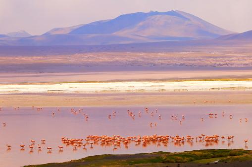 Bolivian Andes「Impressive Laguna colorada - Red lake reflection, Andean Flamingos birds and Idyllic Altiplano Atacama Desert, Volcanic landscape panorama – Potosi region, Bolivian Andes, Bolívia」:スマホ壁紙(15)