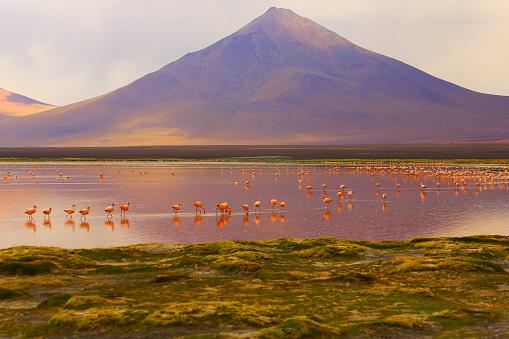 Bolivian Andes「Impressive Laguna colorada - Red lake reflection, Andean Flamingos birds and Idyllic Altiplano Atacama Desert, Volcanic landscape panorama – Potosi region, Bolivian Andes, Bolívia」:スマホ壁紙(7)