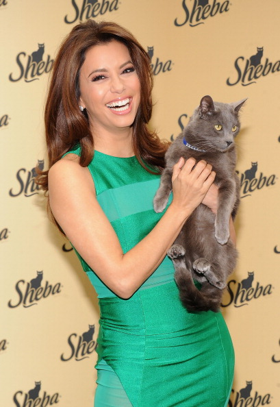 Animal Themes「Sheba. Feed Your Passion Campaign Launch」:写真・画像(3)[壁紙.com]
