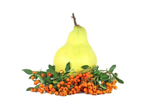 カリン「Quince and hawthorn berry」:スマホ壁紙(13)