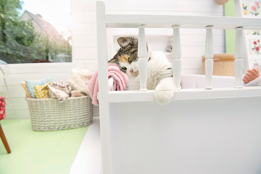 Kitten「cat playing in bed」:スマホ壁紙(17)