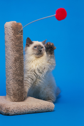 Scratching Post「Cat playing with ball and spring on scratching post」:スマホ壁紙(15)