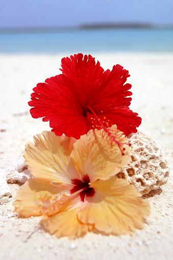 ハイビスカス「Paradise_flower」:スマホ壁紙(16)