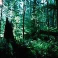 Forest壁紙の画像(壁紙.com)