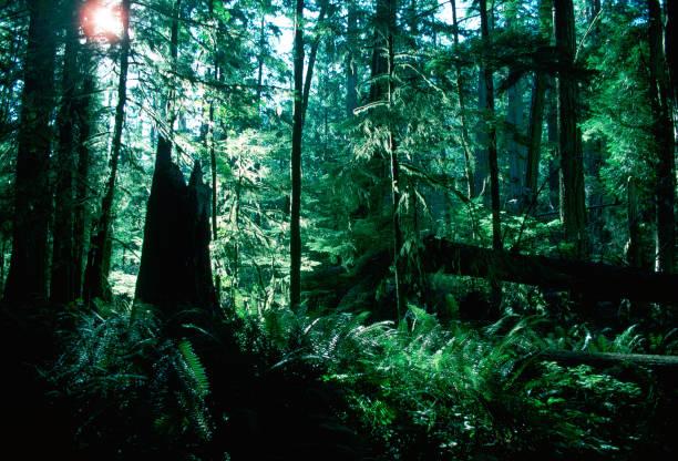 Macmillan Provincial Park, Canada:ニュース(壁紙.com)