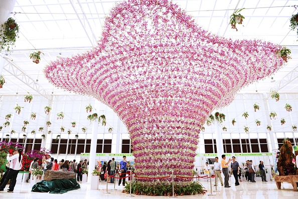 VCG「The International Horticultural Exposition 2011 Opens To Public」:写真・画像(5)[壁紙.com]