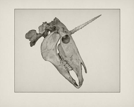 Fairy Tale「Etching of Unicorn skull」:スマホ壁紙(17)