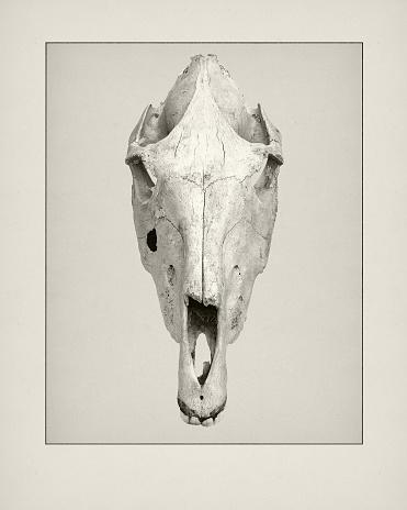 Etching「Etching of Camel skull.」:スマホ壁紙(18)
