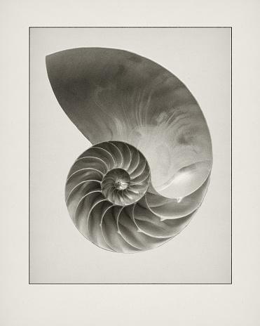 Etching「Etching of Nautilius shell.」:スマホ壁紙(13)