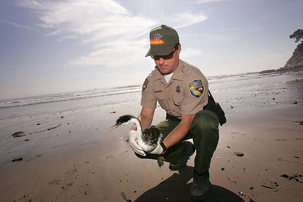 Mysterious Oil Spill Hurts Hundreds Of Sea Birds:ニュース(壁紙.com)