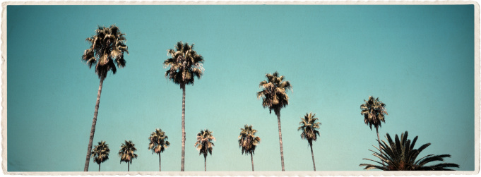 Auto Post Production Filter「California Palms - Vintage Look Series」:スマホ壁紙(17)