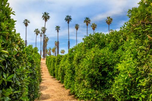 Grove「California Citrus State Historic Park, Riverside」:スマホ壁紙(1)